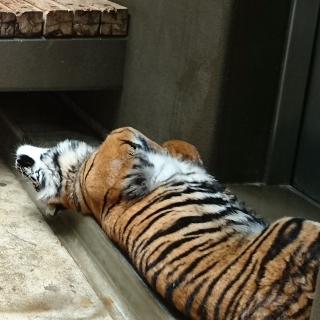 不思議な行動でいっぱい!雨の日の動物園の動物たち