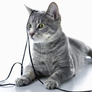 なぜ大人になると猫じゃらしで...