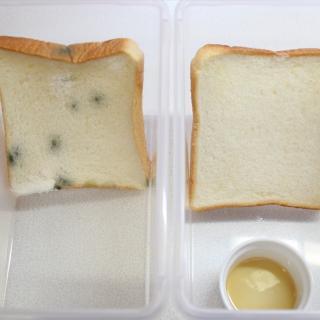 【衝撃の結果!】アレを入れてパンを60日間放置してみた